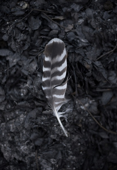 feather-nathan