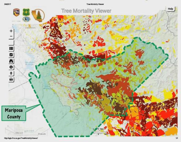 Overgrown Shrubs The California Chaparral Institute Blog