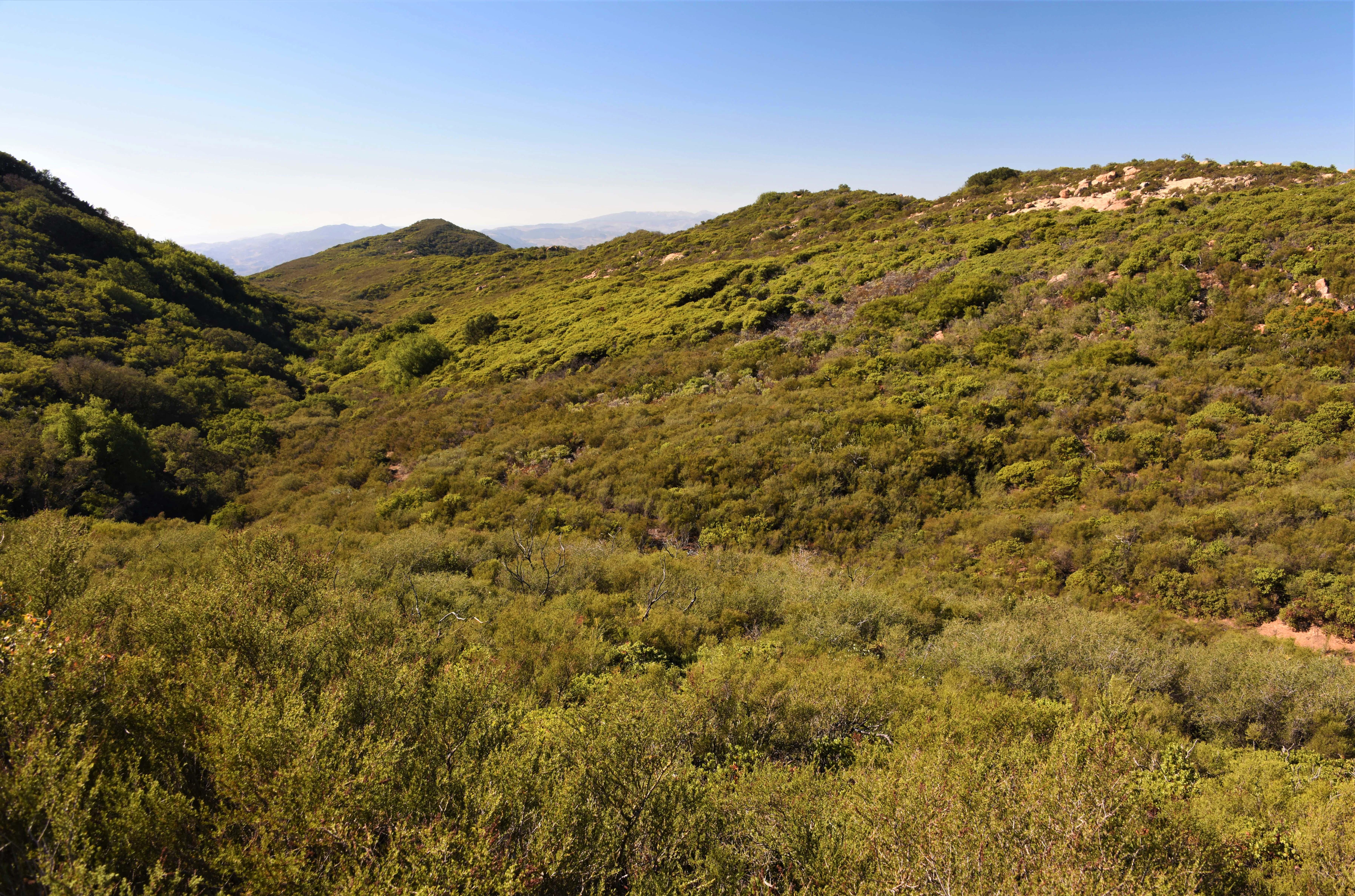 Gaviota area II