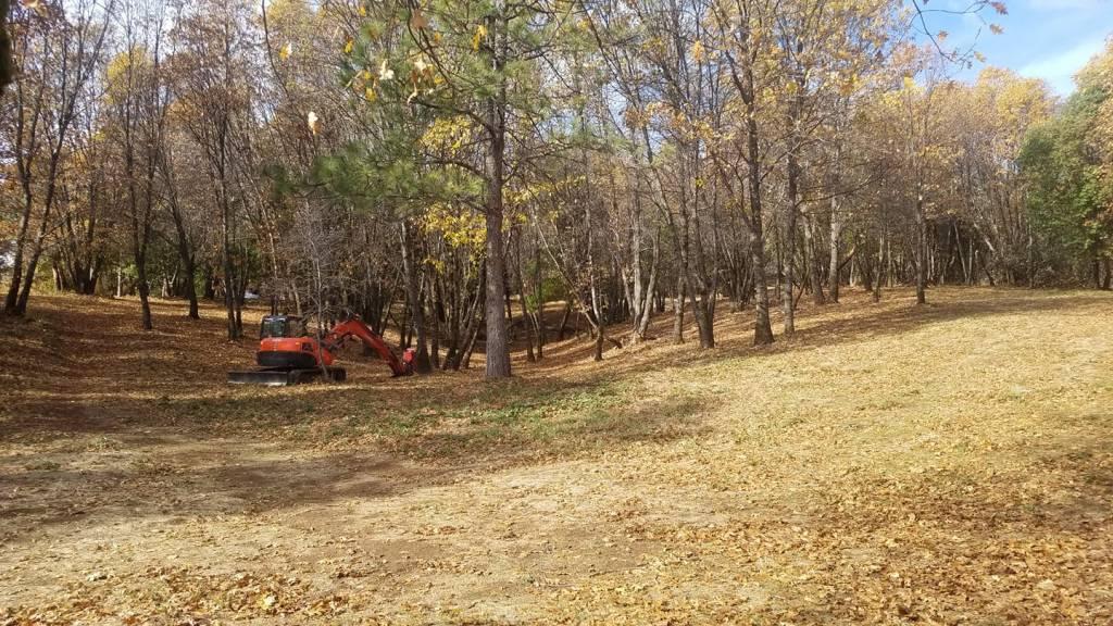 Masticated woodland II