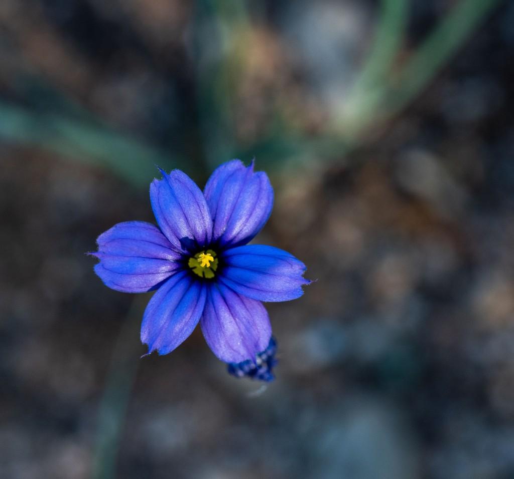 Blue eye-1b
